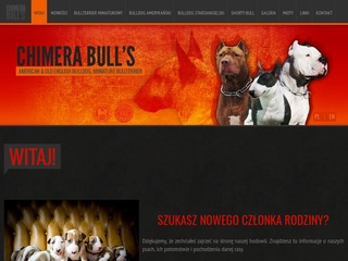 Chimerabulls.pl mini bullterrier
